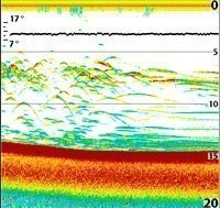 Sounder image with flat fish arches after boat stops. Click Here  for larger image