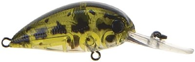REA606 - Ghost Green Shad